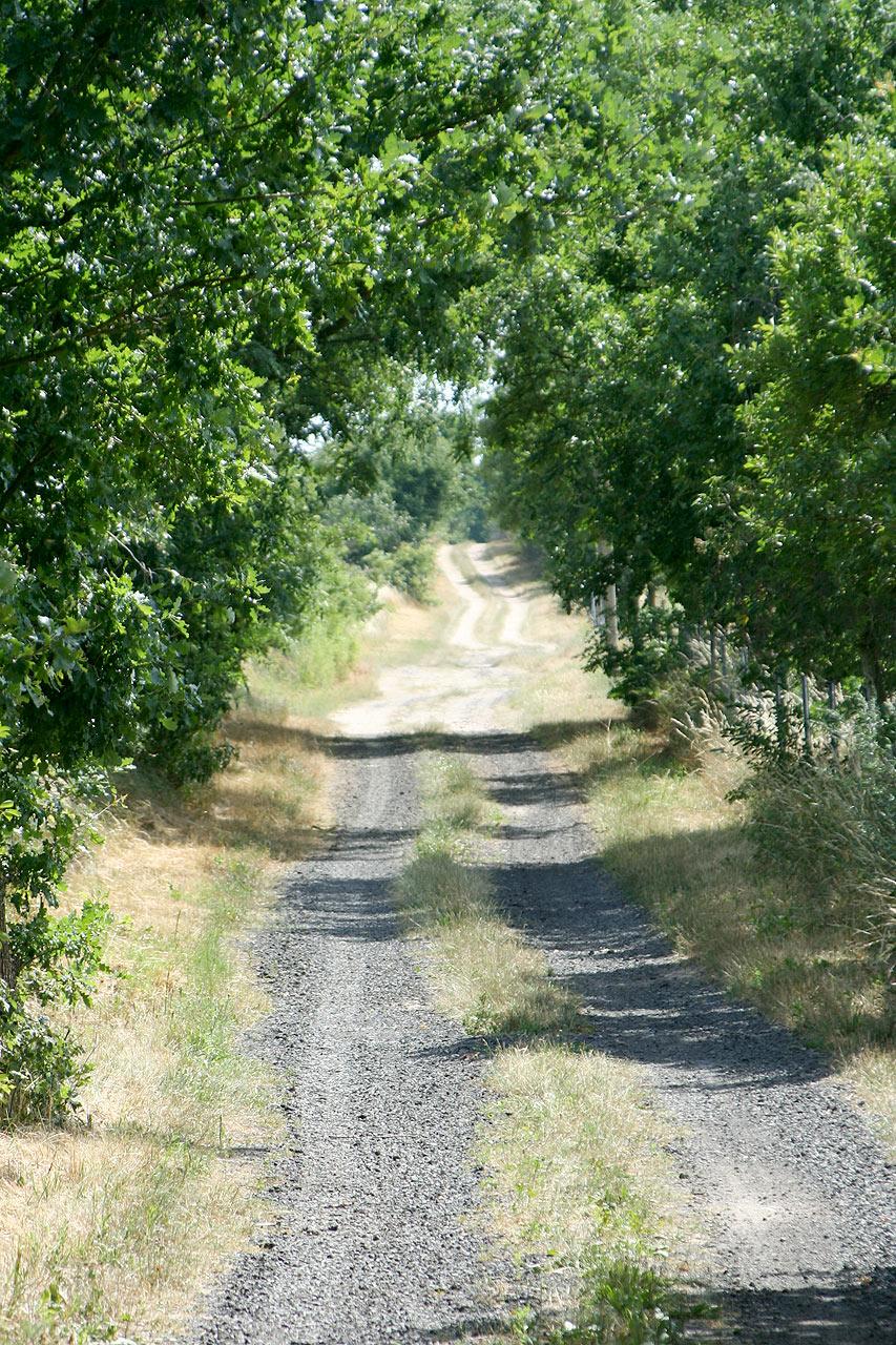 Spazierweg ins Land