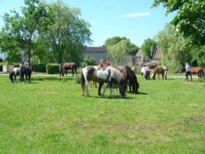 Ponyfarm Bendix